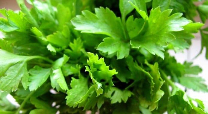 ervas-de-salsa-verde