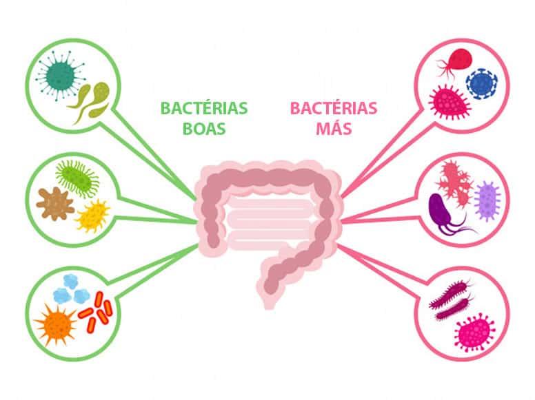 bactérias boas e más