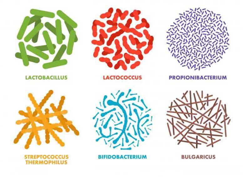 tipos de probióticos